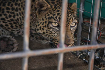 Spot recaptured - the first female to be caught twice