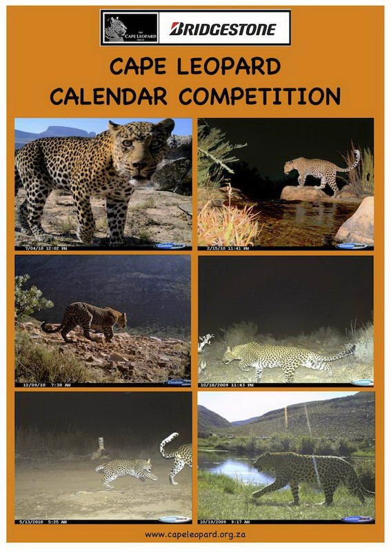 Cape Leopard Calendar Competition Cover page for email