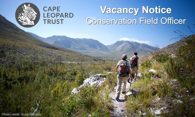 Cape Leopard Trust vacancy - Conservation Field Officer