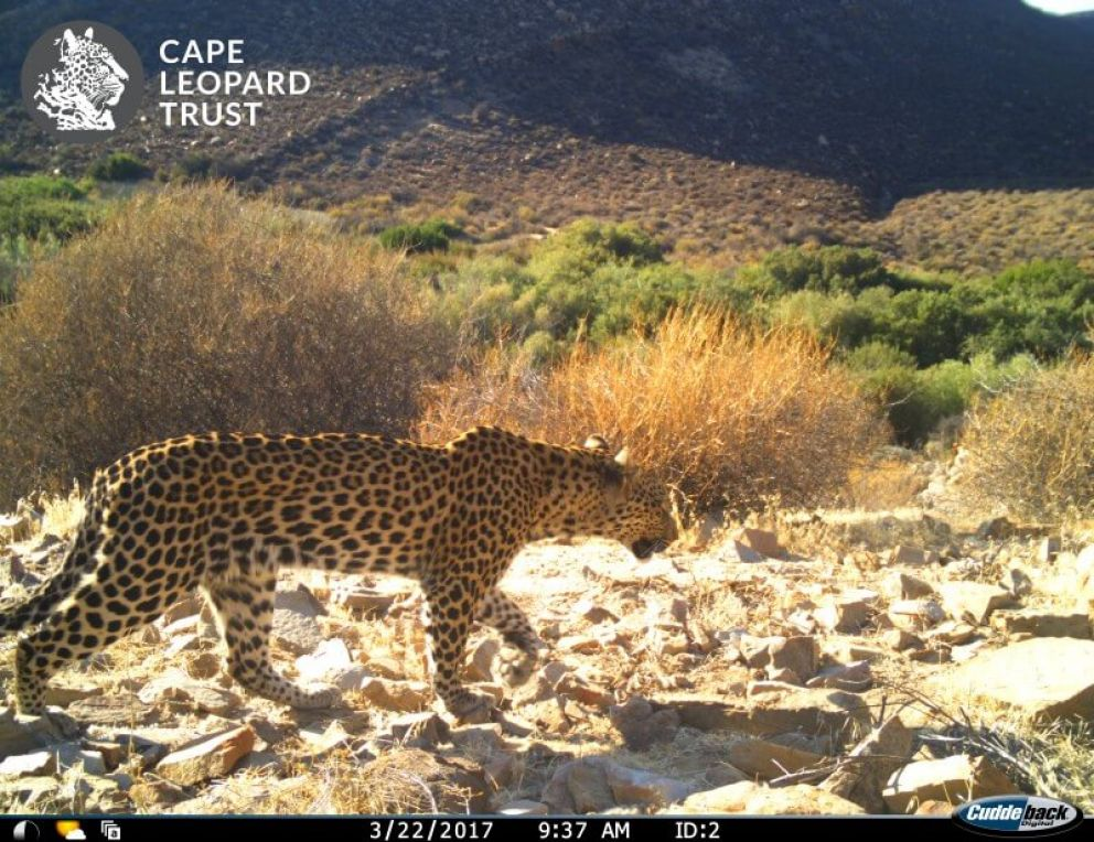 Test Drive for New Leopard Cams