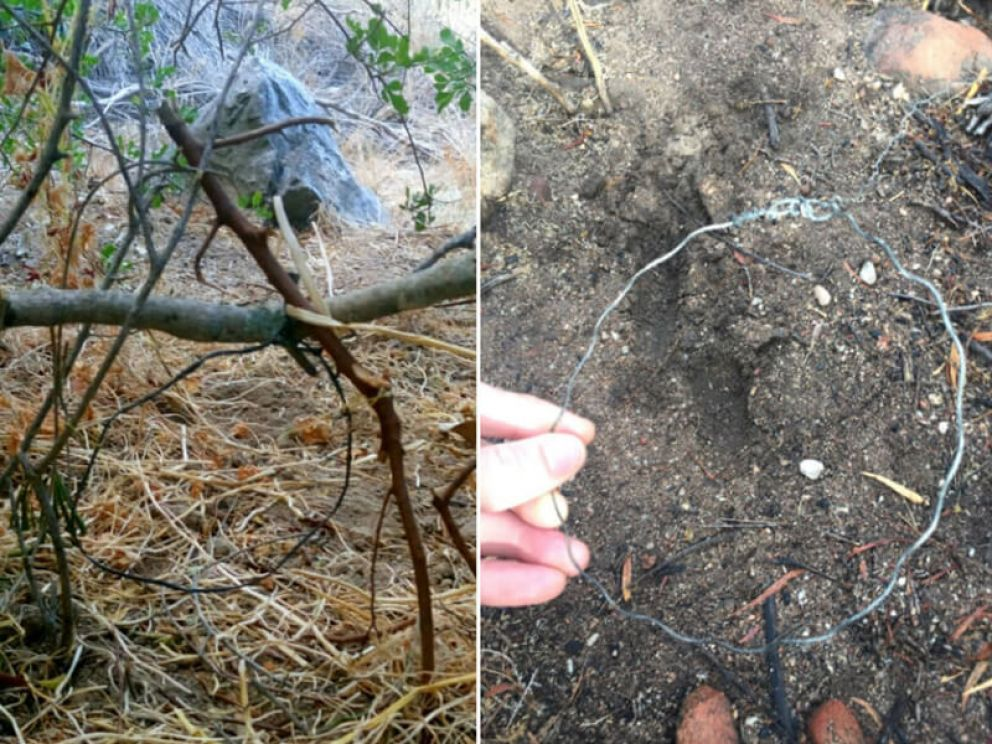 Protecting wildlife from snares in the Boland