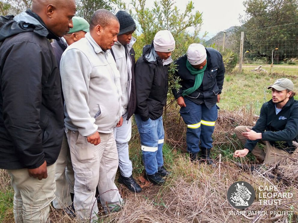 Project update: protecting wildlife from snares in the Boland