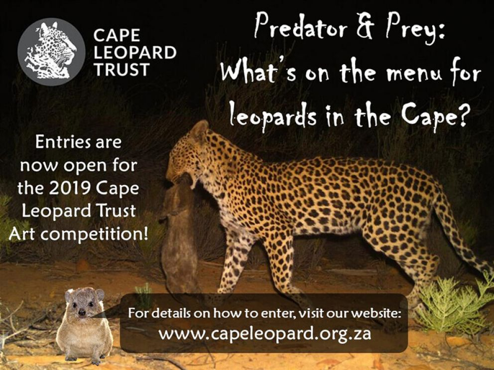 "ART COMPETITION 2019 LAUNCHED: ""Predator & prey: what's on the menu for leopards in the Cape?"""
