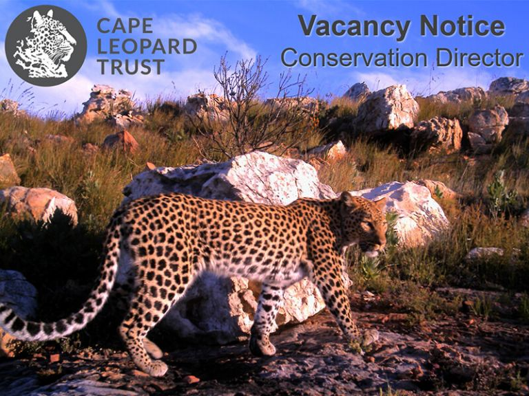 Cape Leopard Trust Vacancy - Conservation Director