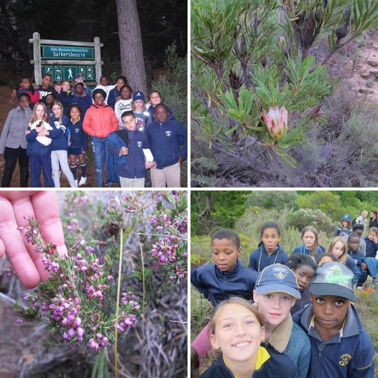Thrive Eco-clubbers enjoy the Suikerbossie trail