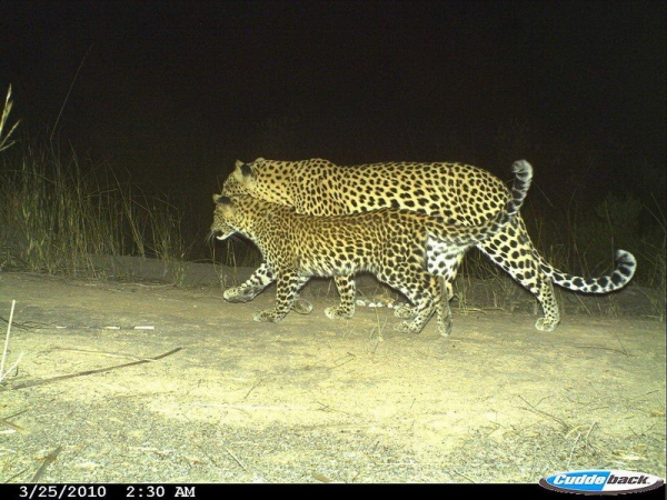 The Cape Leopard Trust - Small Cats with Big Problems