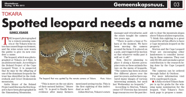 Spotted leopard needs a name
