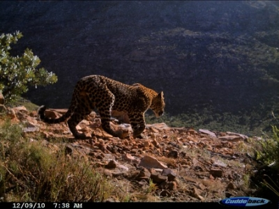 Public Presentation on The Cape Leopard Trust