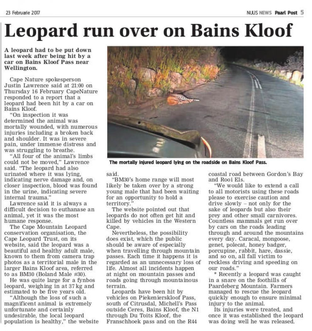 The mortally injured leopard lying on the roadside on Bains Kloof Pass.