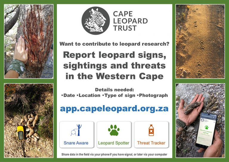 Calling all nature enthusiasts in the Western Cape to partake in the new CLT leopard database project!