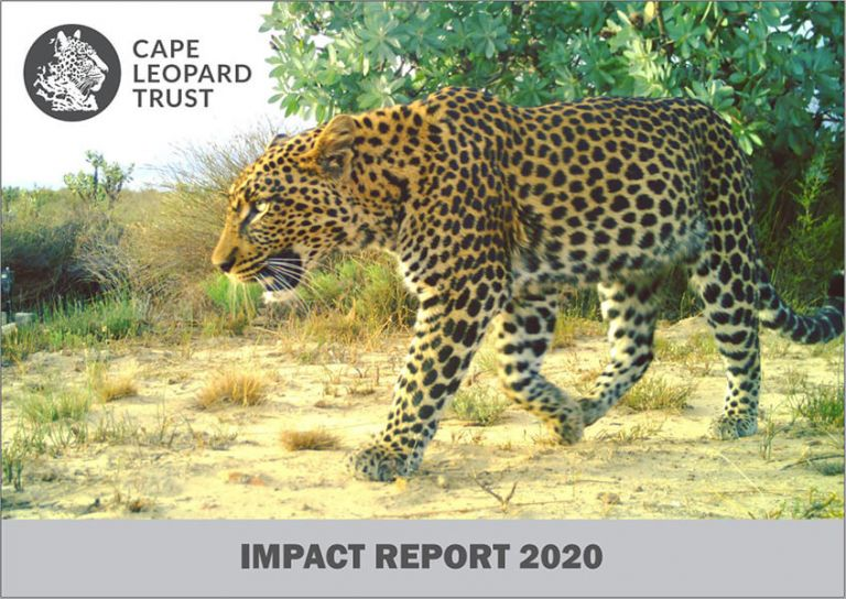 Festive greeting and 2020 CLT Impact Report