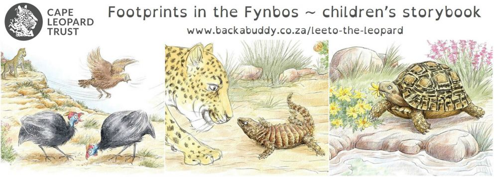 Footprints in the Fynbos - a leopard storybook