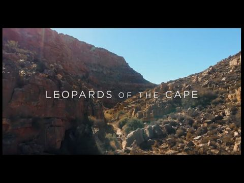 For the Love of Leopards - a CLT short film