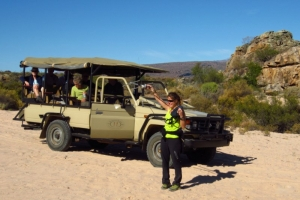 Leopard and caracal tracking at Bushmans Kloof Wilderness Reserve and Wellness Retreat